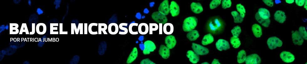 Bajo el Microscopio